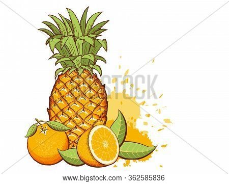 Exotic Fruits. Pineapple, Oranges Vector Color Illustration With Splash Isolated On White