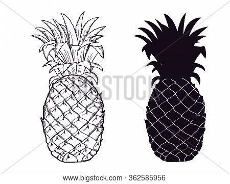 Pineapple Black Silhouette. Vector Hand Drawn Fruit Illustration Isolated On White