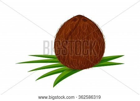 Coconut On Leaf Green, Coconut Brown Fruit Isolated On White, Illustration Coconut For Clip Art And