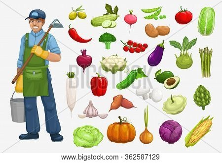 Farmer And Organic Vegetables Harvest Vector Icons, Farming Agriculture. Bio Agrarian And Natural Ec