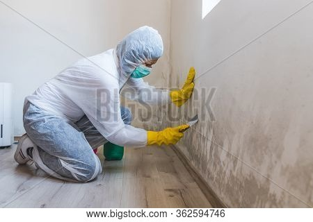 Worker Of Cleaning Service Removes The Mold Using Scraper Tool.