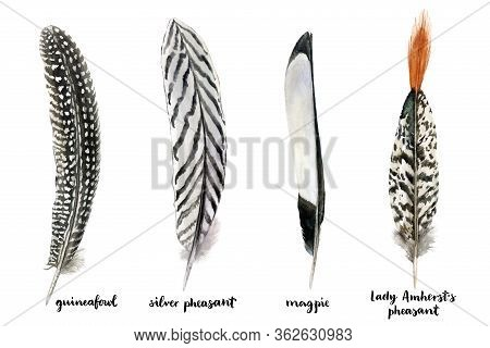 Hand Drawn Watercolor Ritual Meditation Feathers Set. Realistic Feathers Isolated On White Backgroun