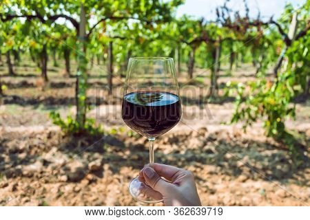Green Grapevine And Wine Glass In Right Hand Of Farmer. Tasting At Sunny Vineyard Area.