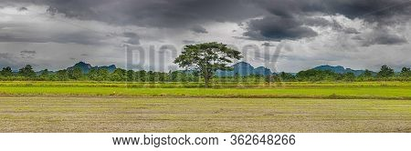 Alone Tree In The Storm On Meadow. Tree In Full Leaf In Summer Standing Alone In A Field Against A S