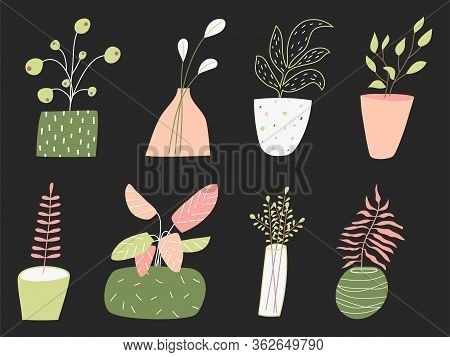 Potted Houseplants Flat Vector Illustration. Flowers For Home Decoration Isolated On Black Backgroun