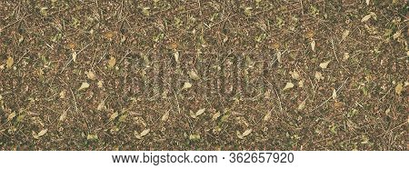 Wild Strawberry Dried Berries And Leaves Layout. Wide Natural Texture. Retro Nostalgic Autumn Vintag