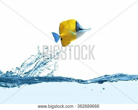Beautiful Tropical Longnose Butterfly Fish In Clear Water