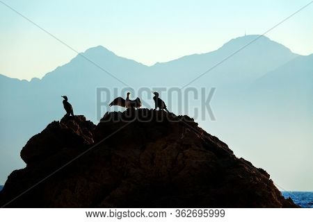 group of tropical seabird stting and restin on rocks at Mediterranean seaside of Antalya