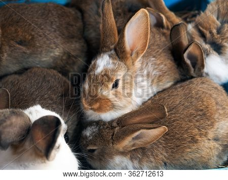 Many Young Rabbits In The Farm's Enclosure