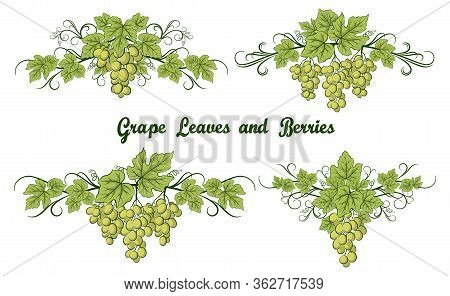 Set Of Grape Bunches, Green Berries And Leaves On White Background.
