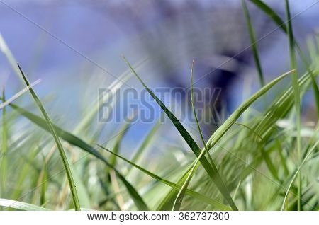 Close Up Of Green Grass And Bokeh Background With Tree, Savoy France