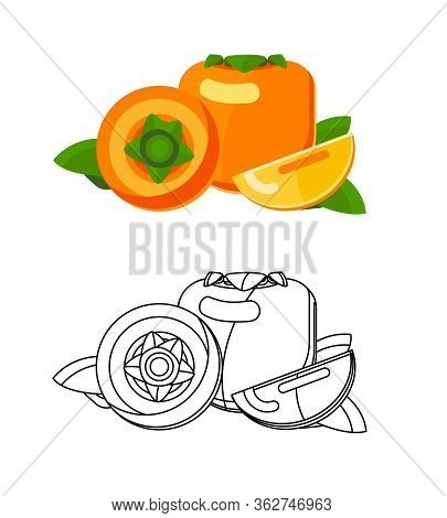 Persimmon Picture Flat Vector Illustration. Set Of Colored Fruits And Lines. Astringent And Tart Kor