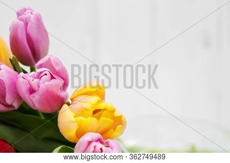 Bright Greeting Card. Decorated With Tulips On A Light Background.