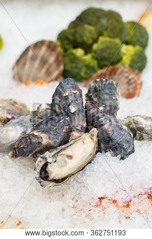 Far Eastern Oysters On A Crumb Of Ice. Showcase In A Restaurant.