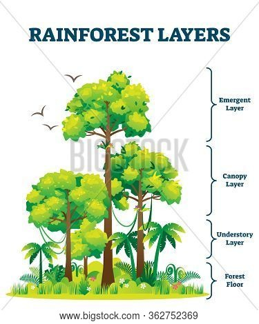Rainforest Layers Vector Illustration. Jungle Vertical Structure Educational Scheme. Graphic With Em