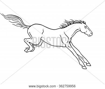 A Horse Landing After A Jump - Vector Linear Picture For Coloring Or Pictogram. Horse After The Jump