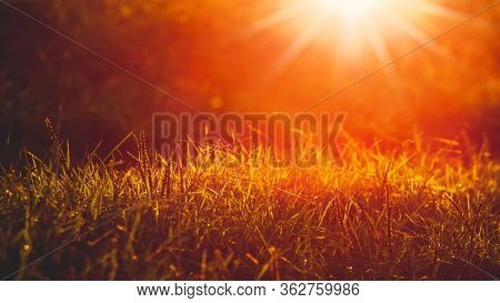 Autumn Background With Grass In Ray Of Sunlight During Sunset In Warm Tones
