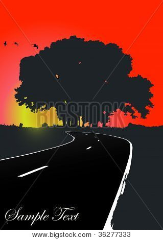 Silhouette of the tree on the road