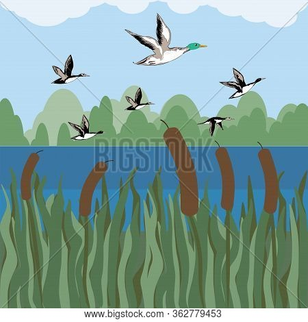 Natural Landscape - A Flock Of Wild Ducks, River, Reeds, Forest - Vector. Tourism. Travels