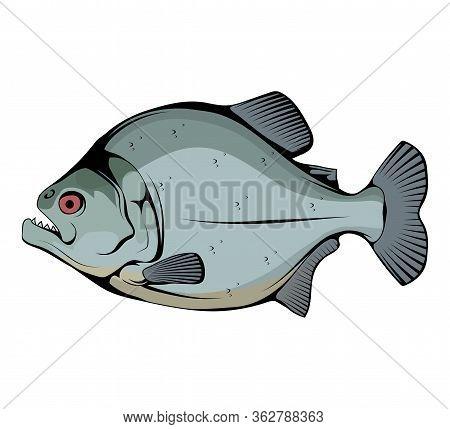 Piranha. Fish Piranha Mascot Logo. Hunter Predatory Fish. Piranha Fish Logo. Living In Rivers And Fr