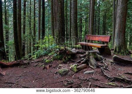 Rain Forest, Bench By The Forest Hiking Nrail. This Forest Is Located In Lynn Canyon Provincial Park