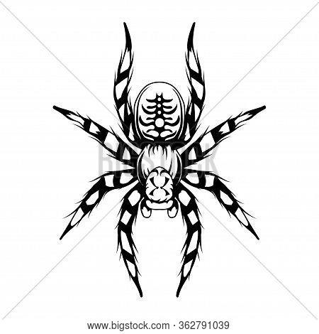 Tarantula. Tarantulas, Animalia, Arthropoda, Chelicerata, Arachnida, Araneae, Mygalomorphae Vector.