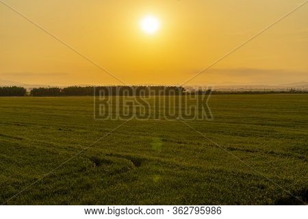 Sunset In A Rice Field Of The