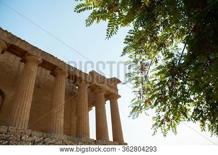 Valley of the Temples (Valle dei Templi), an ancient Greek Temple built in the 5th century BC with winery tree in foreground, Agrigento, Sicily. Famous tourist attraction in Italy. Travel destination