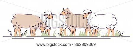 Flock Of Sheeps On Pasture Flat Vector Illustration. Livestock Farming, Animal Husbandry Cartoon Con