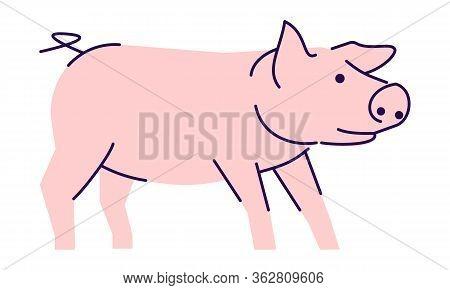 Cute Pink Pig Side View Flat Vector Illustration. Livestock Farming, Domestic Animal Husbandry Desig
