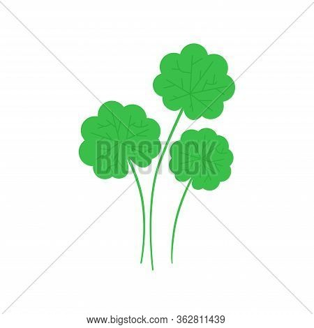 Gotu Kola Plant Leaf In Flat Style. Asiatic Pennywort Isolated On White Background. Superfood Gotu K