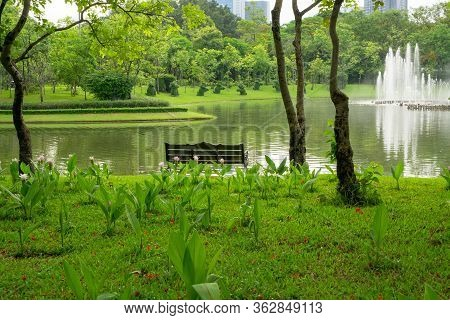 An Empty Wooden Bench On Green Grass Lawn Among Pink Siam Tulip Flower Under The Trees Beside A Lake