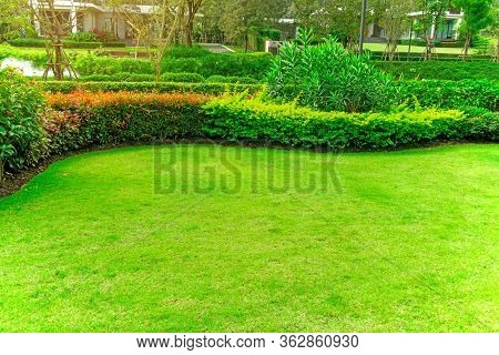Fresh Green Burmuda Grass Smooth Lawn As A Carpet With Curve Form Of Bush, Trees On The Background,