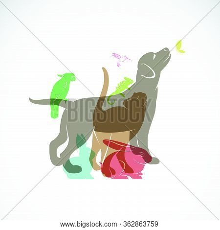Vector Group Of Pets - Dog, Cat, Parrot, Chameleon, Rabbit, Butterfly, Hummingbird Isolated On White