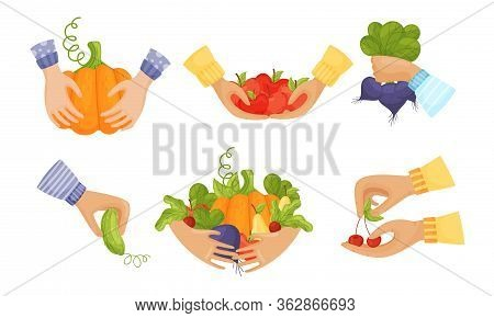 Hands Holding Agricultural Crops Like Pumpkin And Apples Vector Set
