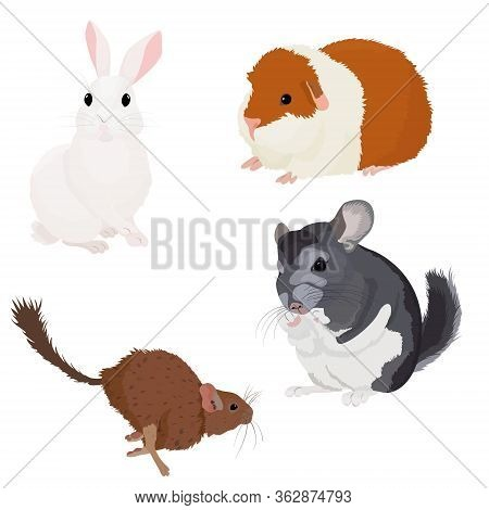 Cute Rodents Set, Small Wild And Domestic Animals Vector Illustration On White Background. Cartoon D