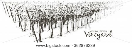 Vector Vine Plantation Hills Landscape. Drawing Of Rows Of Vineyards With Wine Stains. Line Sketch I