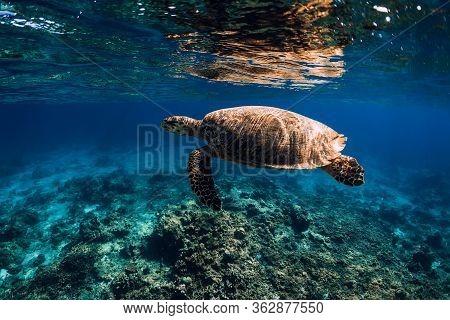 Sea Turtle Glides In Blue Ocean. Turtle Swim Underwater