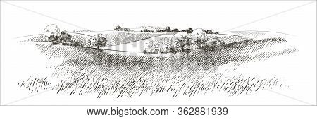 Vector Sketch Green Grass Field On Small Hills. Meadow, Alkali, Lye, Grassland, Pommel, Lea, Pastura