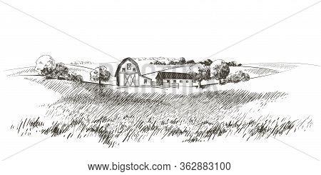 Vector Sketch Green Grass Field On Small Hills. Meadow, Alkali, Lye, Grassland, Pommel, Lea, Pastura