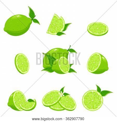Lime Citrus Fruit, Green And Juicy, Juice Vitamin Organic. Collection Of Fresh Limes. Designed For L