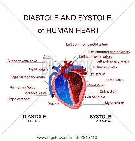 Diastolic And Systolic Blood Pressure. Vector Illustration