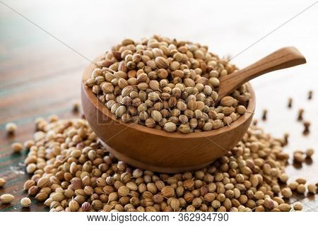 Organic Dried Coriander Seeds (coriandrum Sativum) In Wooden Bowl With Spoon On Colored Rustic Backg