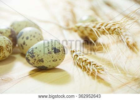 Fresh Quail Eggs, Rustic Style On Wood Background.