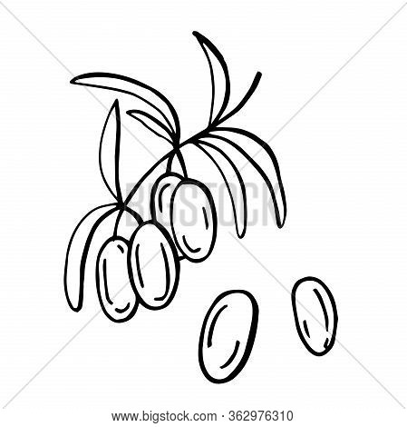 Hand Drawn Line Art Illustration. Drawing Healthy Food - Green Olives With Leaves On The Brunch. Vec
