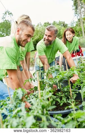 Team gardeners or environmentalists with plants work together in a nursery