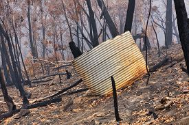 A Water Tank And Gum Trees Burnt By Bushfire In The Blue Mountains In Australia