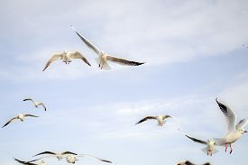Birds In The Sky - A Flock Of Flying Seagulls Against Pale Blue Sky