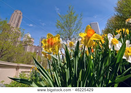 Chicago In Springtime