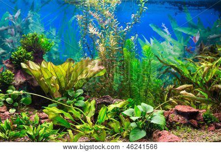 Interior Aquarium
